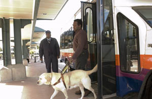 Service Dog and Bus